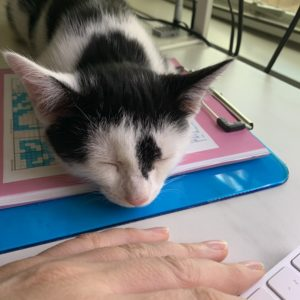 Images shows a black and white kitten asleep on a desk.